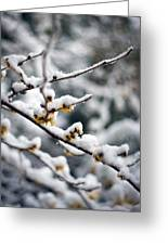 Winter Fleurs Greeting Card