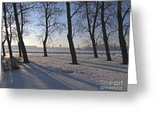 winter forest Peterburg Greeting Card