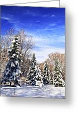 Winter Forest Under Snow Greeting Card by Elena Elisseeva