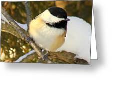 Winter Friend Greeting Card