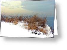 Winter Grasses In Snow Greeting Card