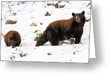 Winter Guide Greeting Card