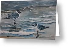 Winter Gulls Greeting Card