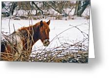 Winter Horse Landscape Greeting Card