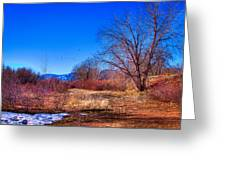 Winter In South Platte Park Greeting Card