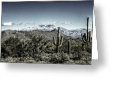 Winter In The Desert Greeting Card
