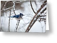 Winter Jay Greeting Card