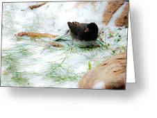 Winter Junco Greeting Card