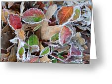 Winter Leaves Greeting Card by Linda Pope