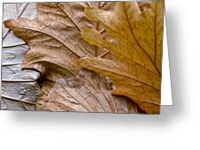 Autumn Leaves Of Gold Greeting Card