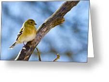 Winter Morning Song Bird Greeting Card