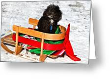 Winter Ride Greeting Card