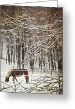 Winter Scene With Horse Grazing In Wooded Pasture Greeting Card