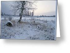 Winter Scene With Snow-covered Grasses Greeting Card