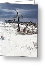 Winter Shenandoah National Park Greeting Card by Thomas R Fletcher