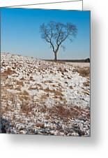 Winter Tree Nachusa Grasslands Greeting Card