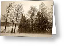 Winter Treeline Greeting Card