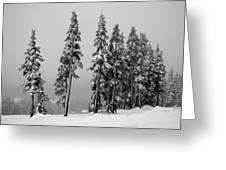 Winter Trees On Mount Washington - Bw Greeting Card