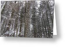Winter Tress Greeting Card