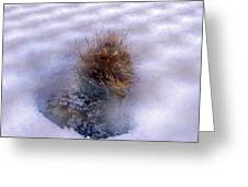 Winter Weed Greeting Card