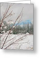Winter Woods Greeting Card by Joann Vitali
