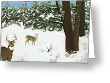 Wintering Whitetails Greeting Card