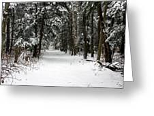 Winter's Path Greeting Card