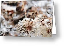 Winters Vine Greeting Card