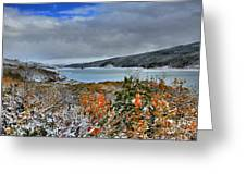 Wintry Dusting Greeting Card