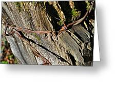 Wired Fence Post Greeting Card