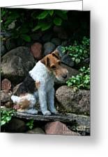 Wirehair Fox Terrier Greeting Card