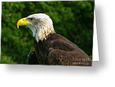 Wisconsin Bald Eagle Greeting Card