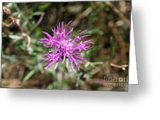 Wispy Thistle Greeting Card