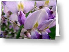 Wisteria Flowers Greeting Card