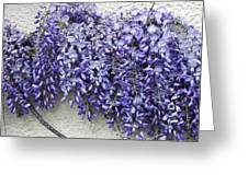 Wisteria Sp Greeting Card