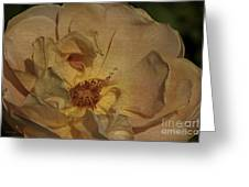 Withering Rose Greeting Card