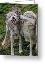 Wolf Confab Greeting Card