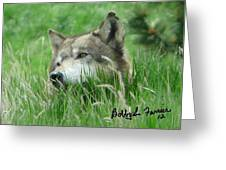 Wolf Laying In Grass Greeting Card