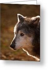 Wolf Outlined By The Sun Greeting Card
