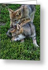 Wolf Play Greeting Card