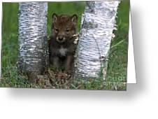 Wolf Pup Playing Peekaboo Greeting Card