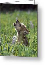 Wolf Puppy Howling In Mountain Meadow Greeting Card