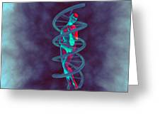 Woman And Dna Greeting Card by Christian Darkin
