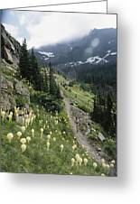 Woman Hiking On Sperry Chalet Trail Greeting Card