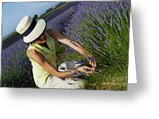 Woman Picking Up Lavender Flowers In Field Greeting Card