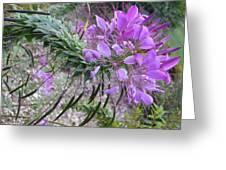 Wonder Flower Greeting Card