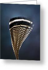 Wood Duck Feather Greeting Card