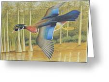Wood Duck Flying Greeting Card