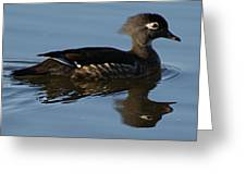 Wood Duck I Greeting Card
