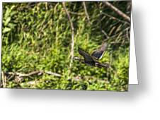 Wood Duck In Flight Greeting Card